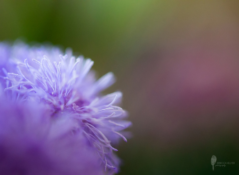 spring flower macro | Chicago Fine Art Photographer